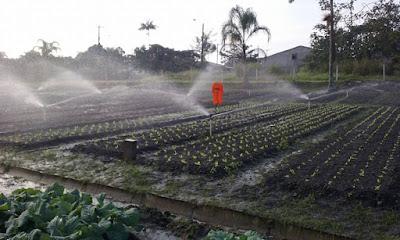 Beneficiários de programas sociais e moradores do CDHU visitarão a horta municipal na sexta 28/06