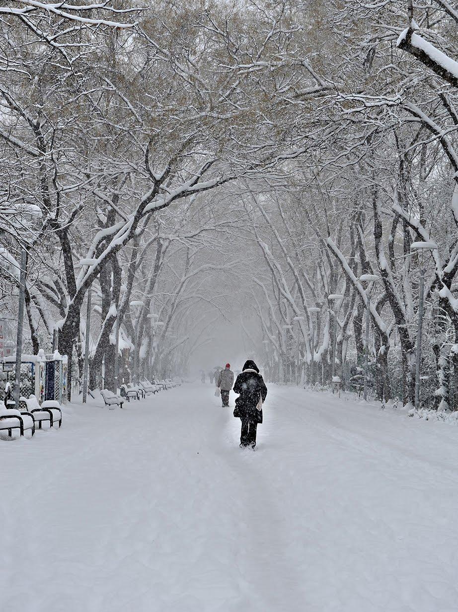 fotoğraf günlüğü, fotoğraf makinesi, fotoğraf yarışmaları, karda fotoğraf çekmek