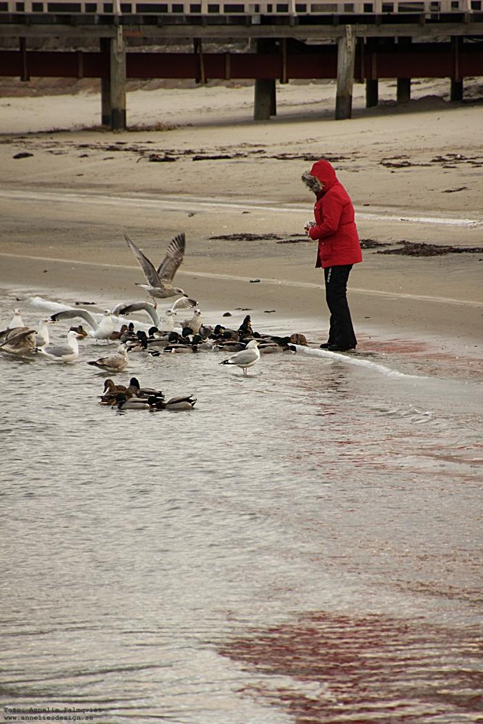 varberg, varbergs stad, västkusten, hamnen, kallbadhuset, kallbad, vinter, vinterbilder, stranden, strand, stränder, sverige, tång, stena line, färjan, färja, visitvarberg,