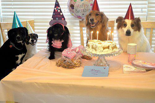 Choices: It's My Birthday And I'm Having A Party