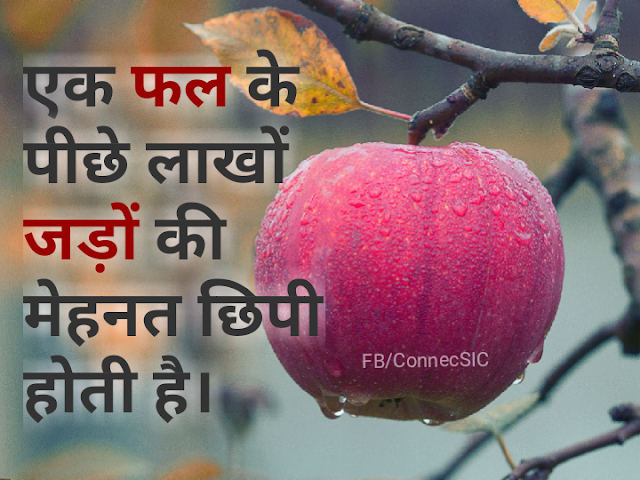 Hindi Quote of Naresh Aggarwal on Hardwork, मेहनत , Roots, Plants, Fruits, Result, Power
