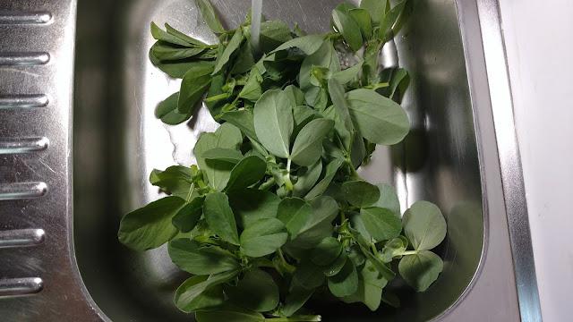Sweet Lorane Fava Bean Growing Tips