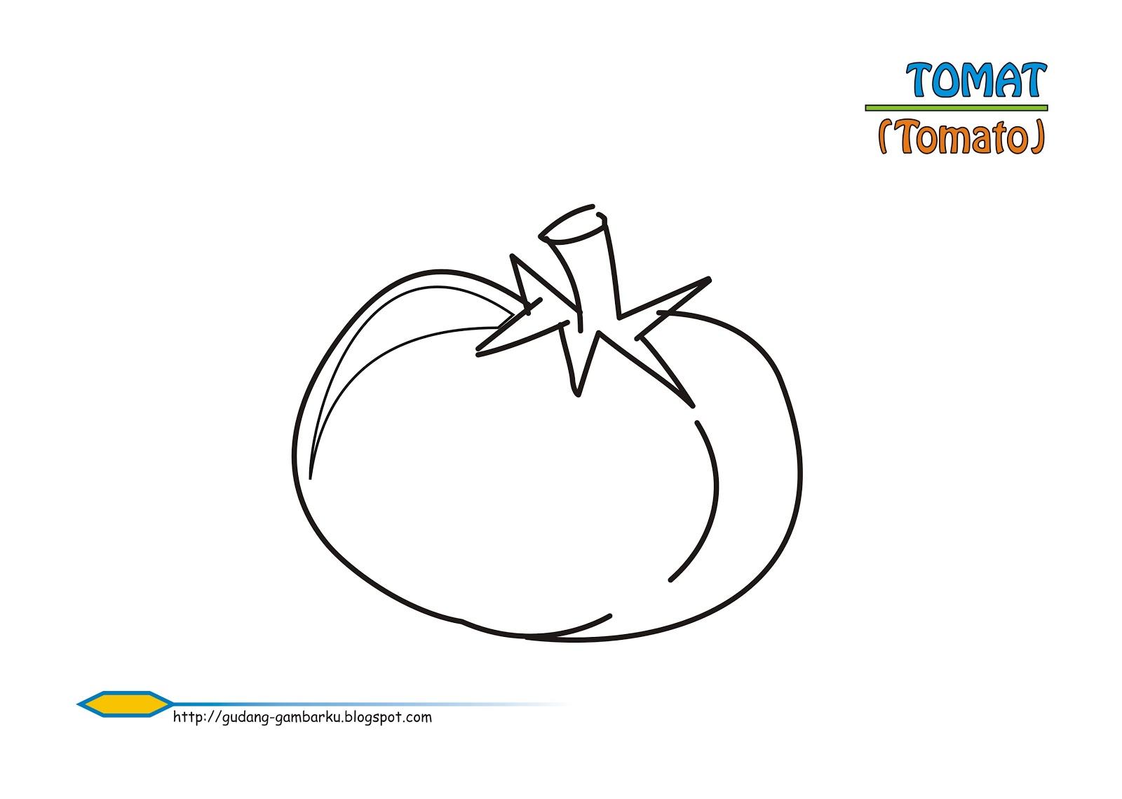 Sketsa Gambar Tomat