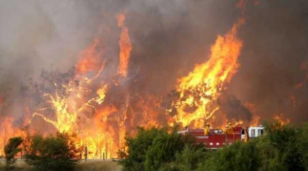 Kebakaran Hutan Melanda Riau