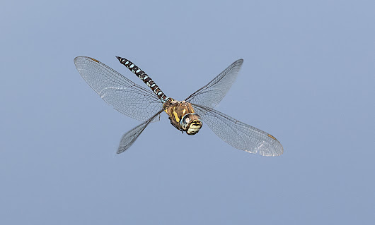 Migrant Hawkers