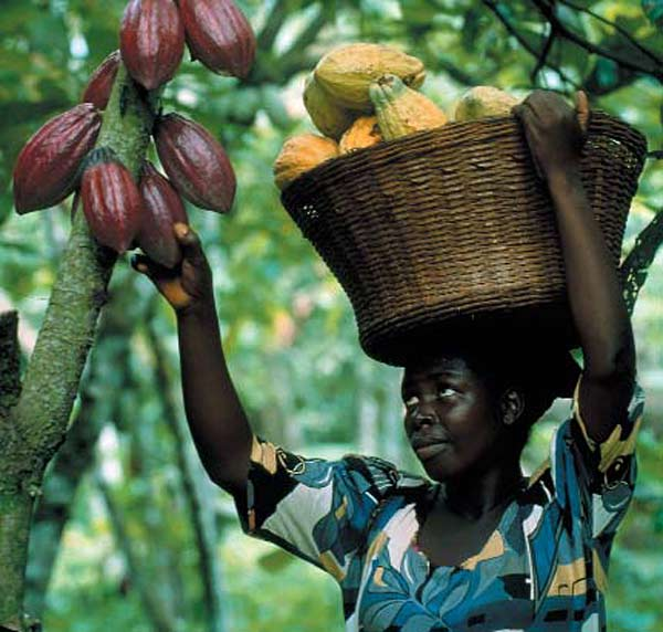 The Real Price of a Chocolate Bar: West Africa's ... |Coco Africa