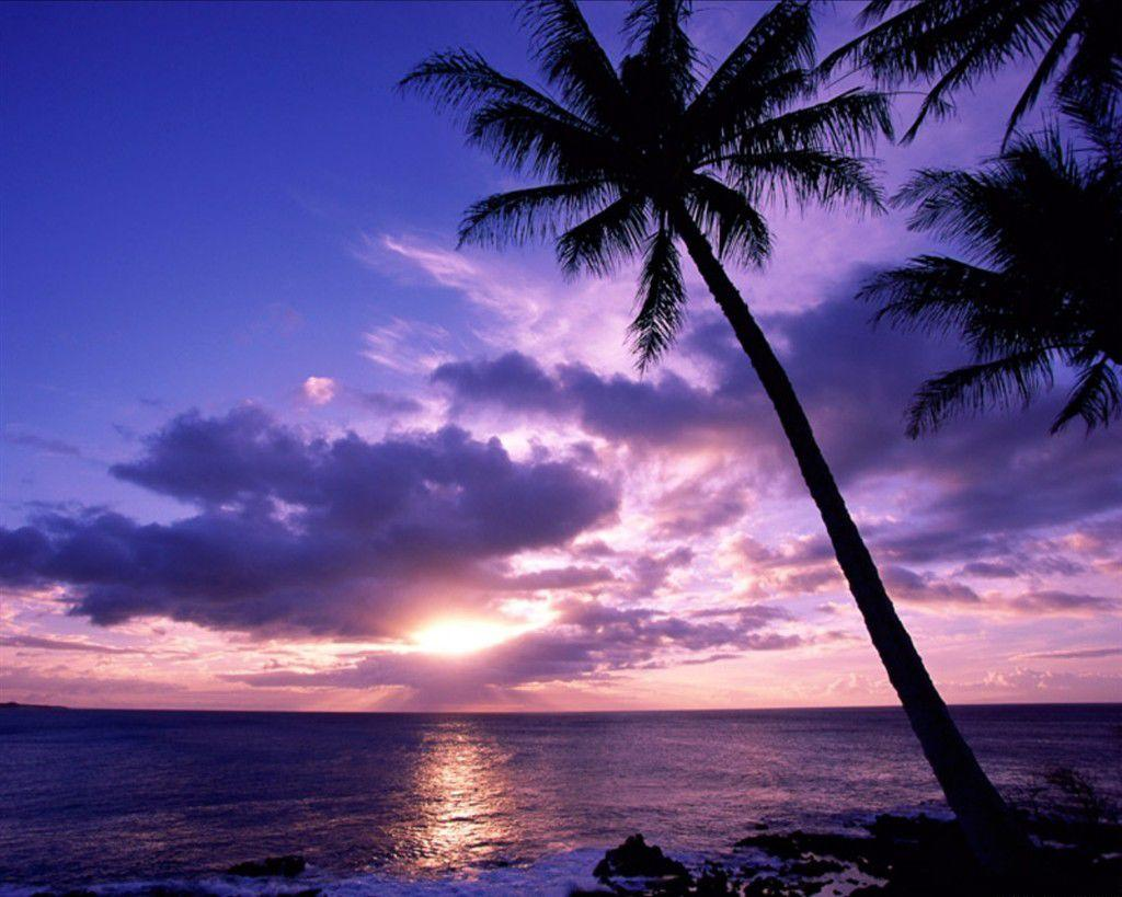 tropical sunset backgrounds -#main