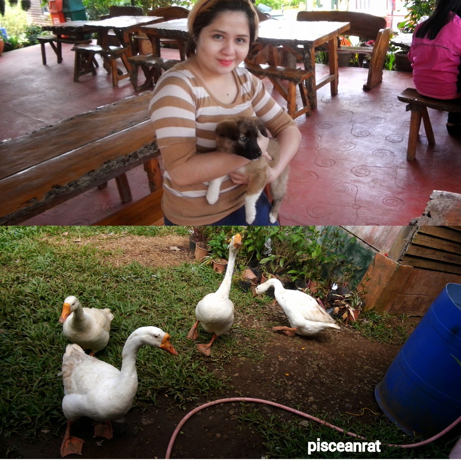 dogs, goose, zoo, paradizoo, zoomanity