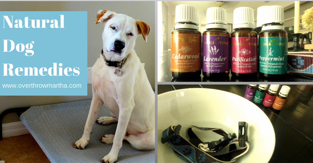 How to use essential oils for dogs to create recipes like shampoo, calming spray and more