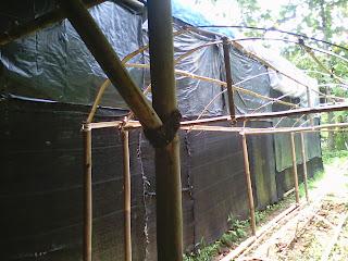 kumbung budidaya jamur tiram bogor