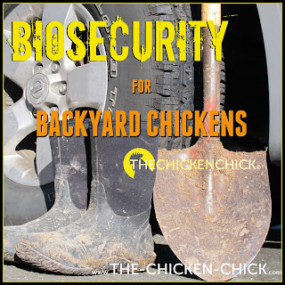 BIOSECURITY: a program of disease prevention in a flock.