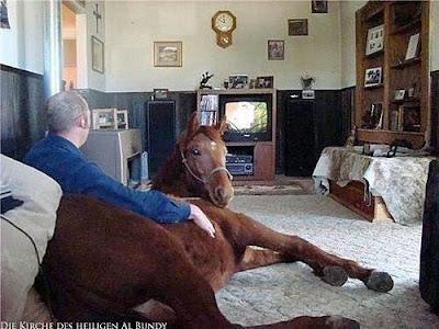 Mit Pferd im Wohnzimmer Fernsehen gucken Spassbilder