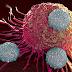 20 de ierburi care ajută în lupta împotriva CANCERULUI