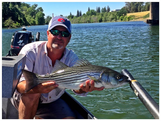 Northern california fly fishing report june 2 2017 for Norcal fishing report