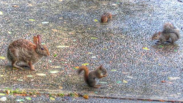 Little Furry Friends: Red Squirrel, Gray Squirrel, Chipmunk and Rabbit