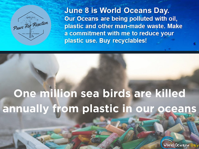 World Oceans Day June 8 plastic pollution