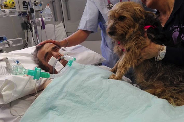 Man In Coma Doesn't Respond To Anyone Until His Dog Shows Up For A Visit [Watch]
