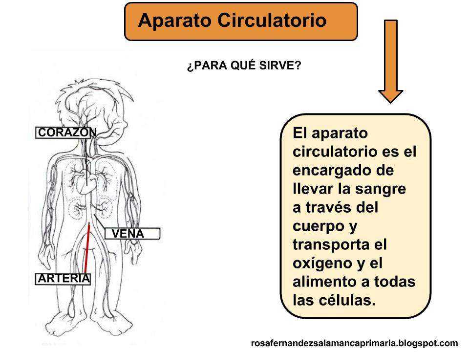 Maestra de Primaria: Aparato respiratorio y circulatorio. 1º de Primaria