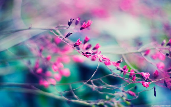 Budding in Pink