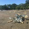 Blue Bottle Jellyfish Padati Pantai Batukaras, Wisatawan Tetap Ramai.