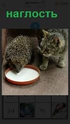 460 слов 4 наглый ежик пьет молоко в миске у кошки, которая стоит рядом 12 уровень