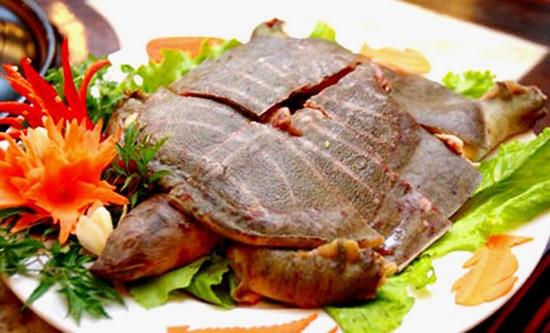 Những lưu ý khi ăn thịt ba ba