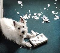 Cão picou livro