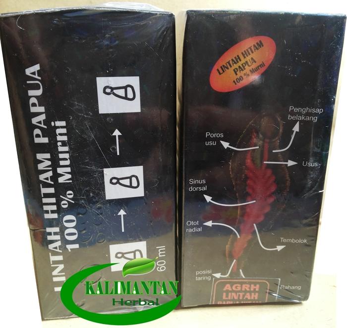 minyak lintah hitam papua pusat ramuan asli kalimantan murah dan