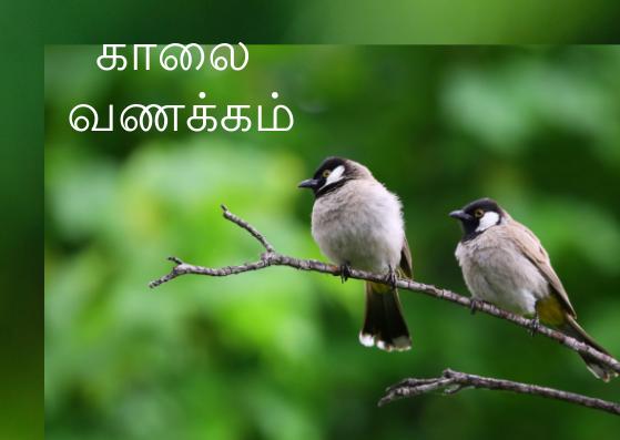 Bird good morning images