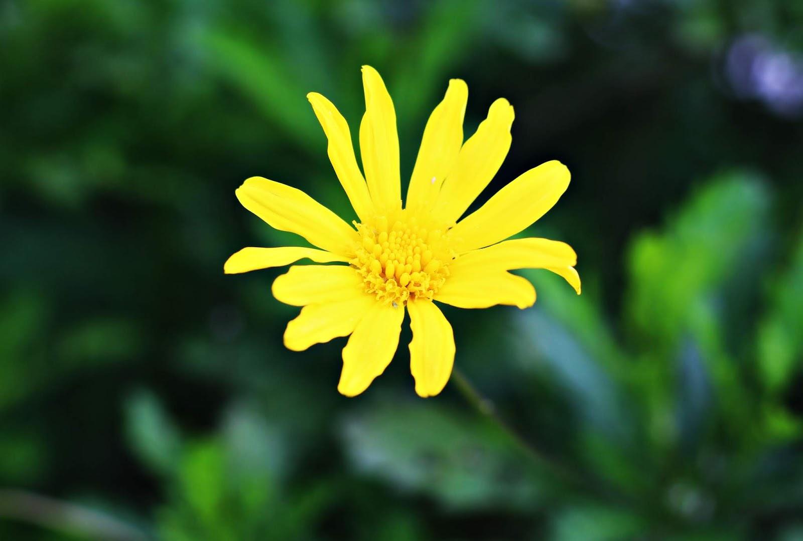 imagem_flores