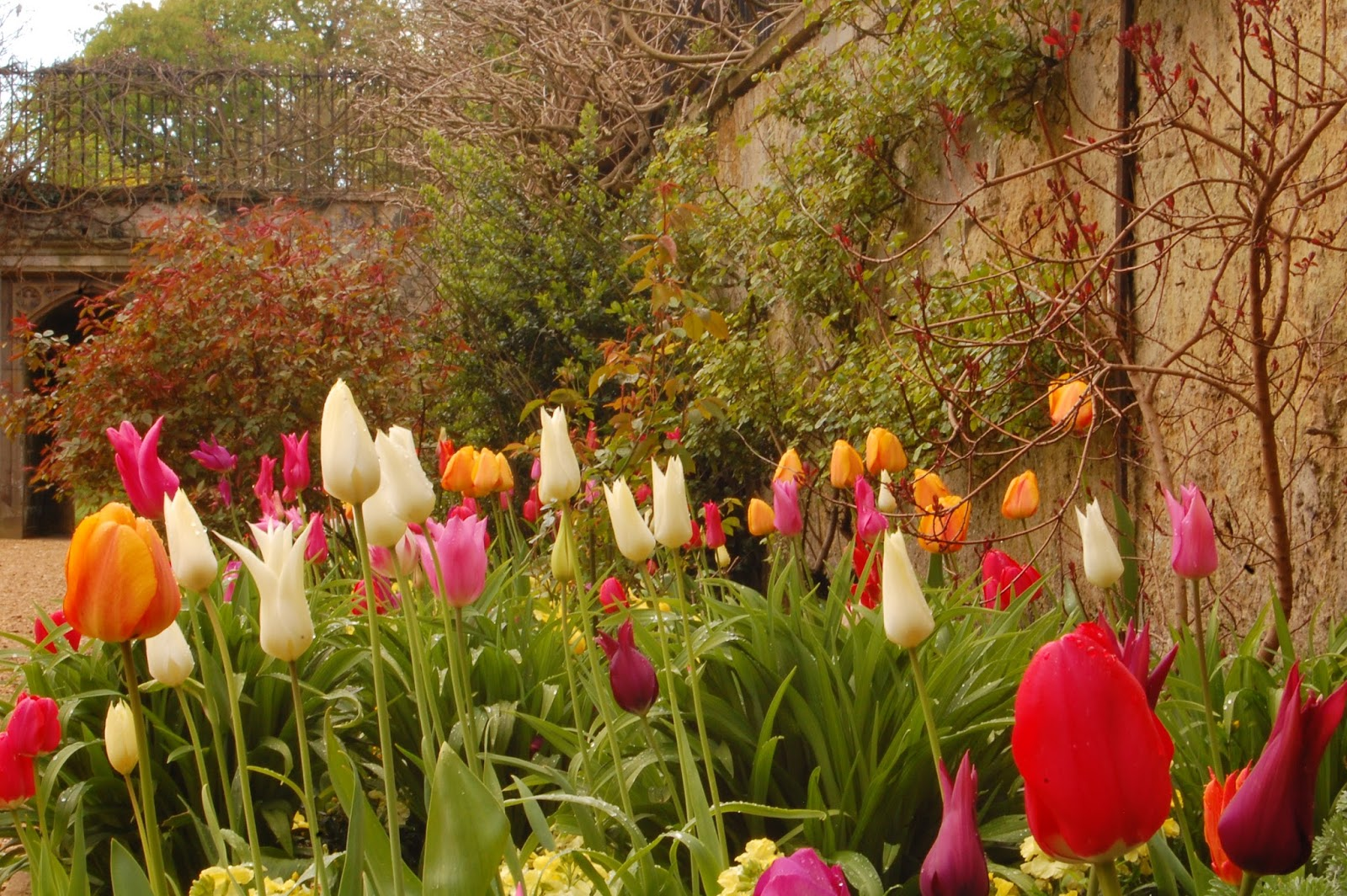 Worcester College Gardeners: The Triumph Of This Year\'s Tulip Displays