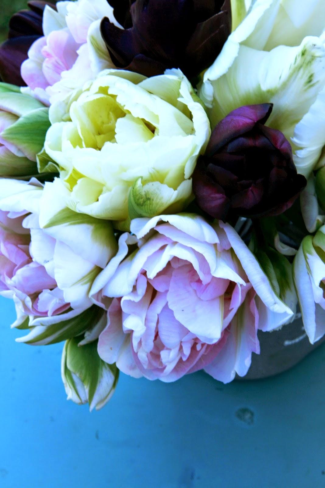 Tulips parrot, white parrot, annelinde, muriel, verona
