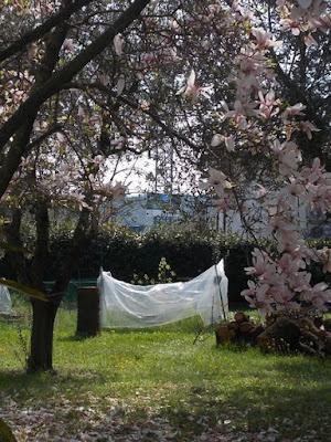 Orto biologico, i cavoli: fioriture non previste