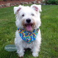 Any Occasion Dog Bandanas