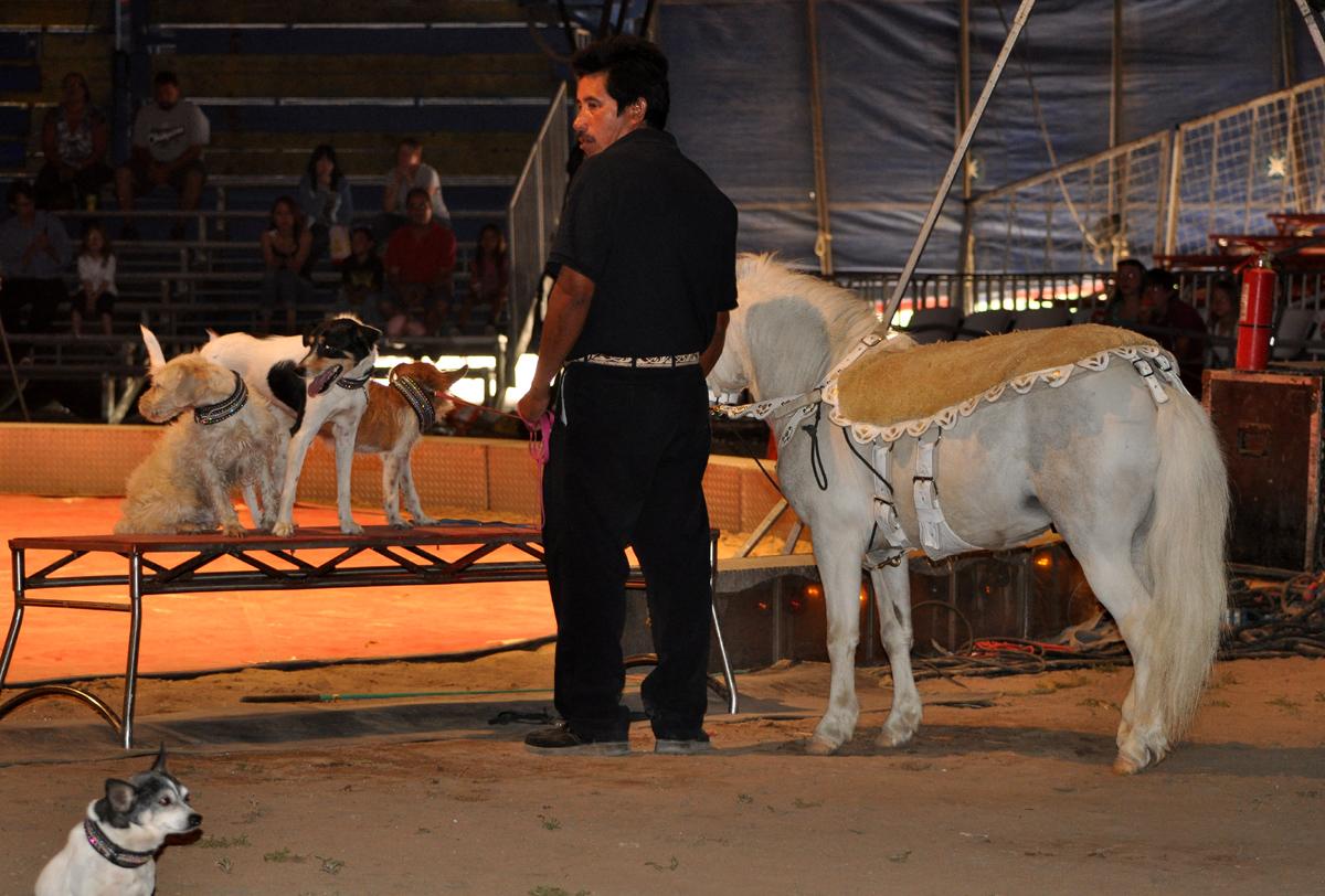 Braymere Custom Saddlery: Dog and pony show