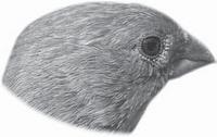 gambar Betuk Paruh Burung Pipit
