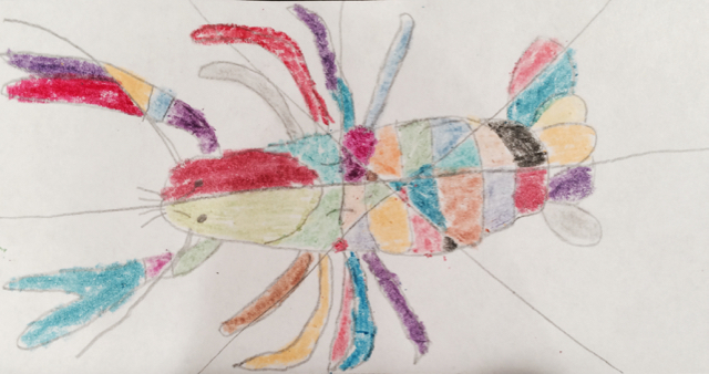 How To Draw A Crayfish Crayfish Anatomy Half A Hundred Acre Wood