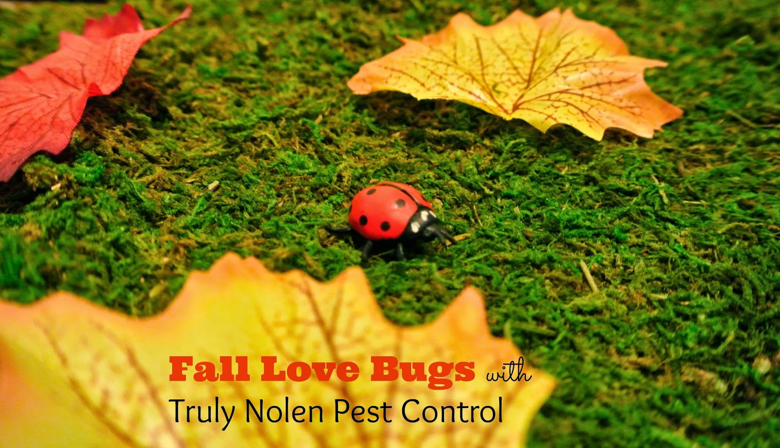 http://b-is4.blogspot.com/2014/09/fall-love-bugs-with-truly-nolen-pest.html
