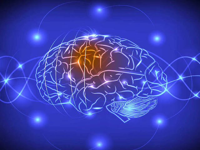Scientists Create 'Social Network' of Brains to Share Thoughts