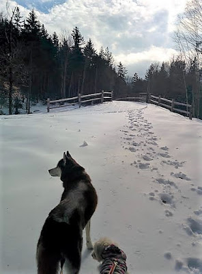Enjoying the long, dog friendly walking trail in Waterville Valley, NH