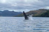 Chile: avistamiento de ballenas