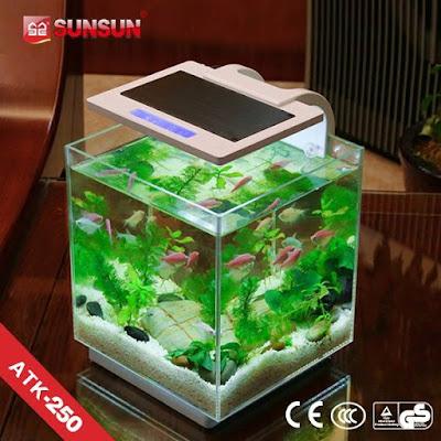 Aquarium cupang cantik dan indah