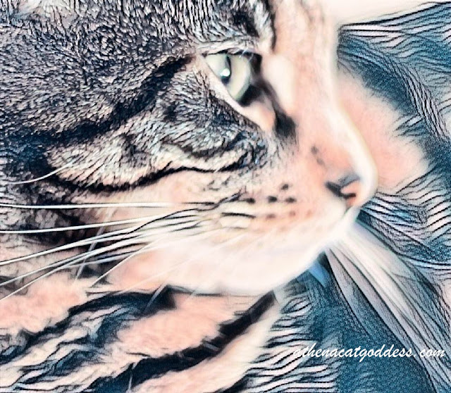 Caturday Art Tattoo Effect