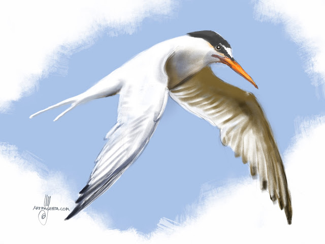 Little Tern bird painting by Artmagenta