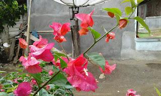 Macam-macam bunga kertas