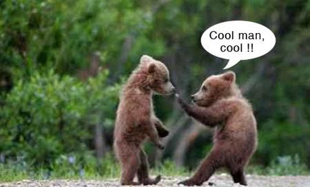 Hình ảnh động vật vui, hài hước