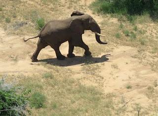 National Elephant that surprised Somalis3
