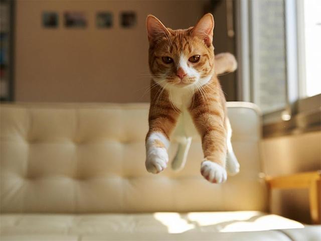 Funny cats - part 347, cute cat photo, cat images, cat gif