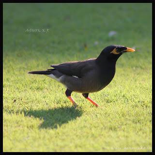 Birds of Karnataka