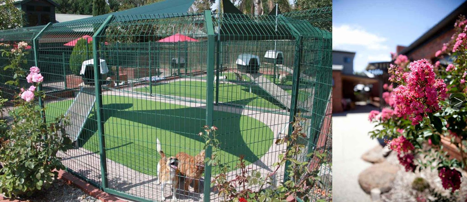 Dog Boarding - Cottage Kennels Victoria - Exercise Runs